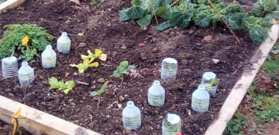 Herbignac - Jardins de Ranrouët